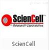 大鼠源性细胞系